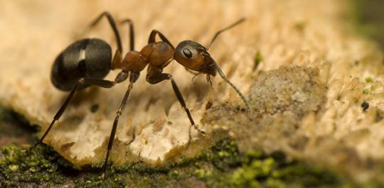Muurahaiskarkote Sisälle